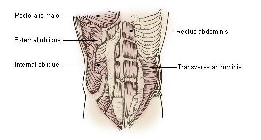 Priamy brušný svaly - abdominal, tehličky na bruchu pohyb.sk