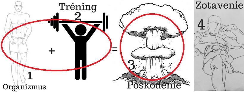 Princíp rastu svalov starý ako matuzalem 123 pohyb.sk
