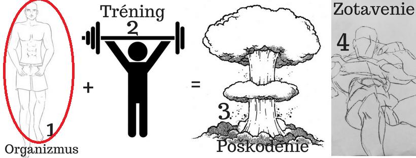 Princíp rastu svalov starý ako matuzalem 1 pohyb.sk