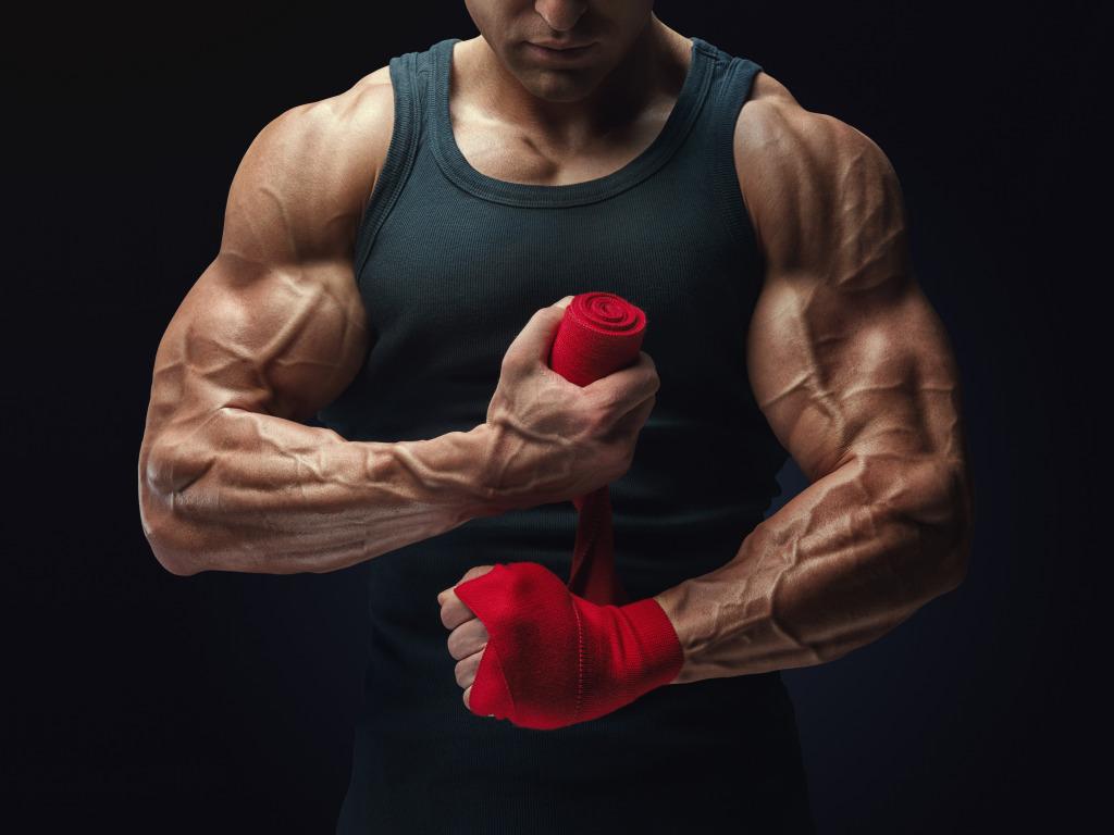 22 štúdií o raste a budovaní svalovej hmoty pohyb.sk