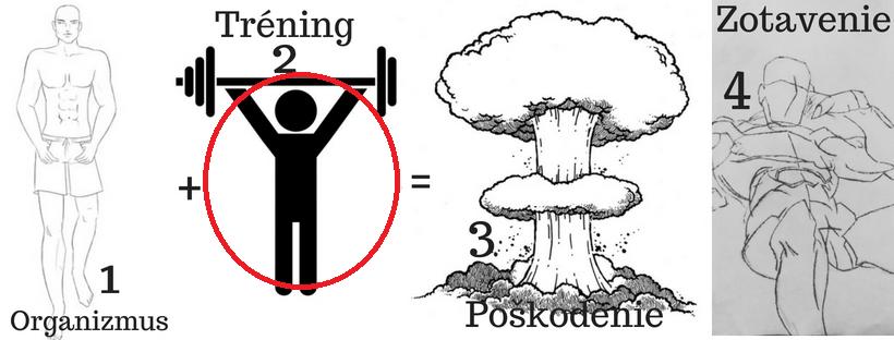 Princíp rastu svalov starý ako matuzalem 2 pohyb.sk