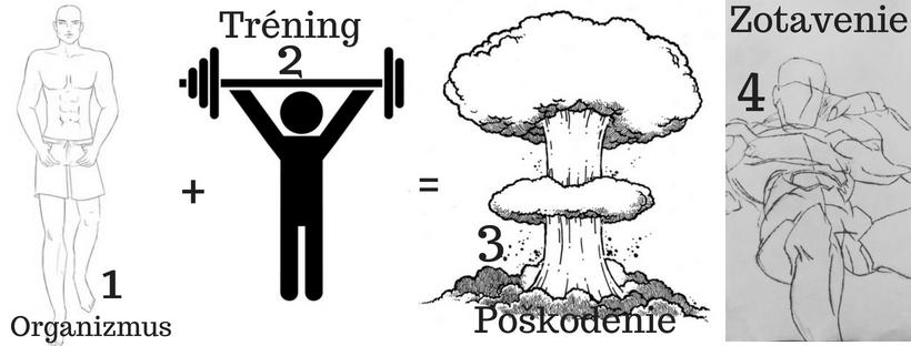 Princíp rastu svalov starý ako matuzalem pohyb.sk